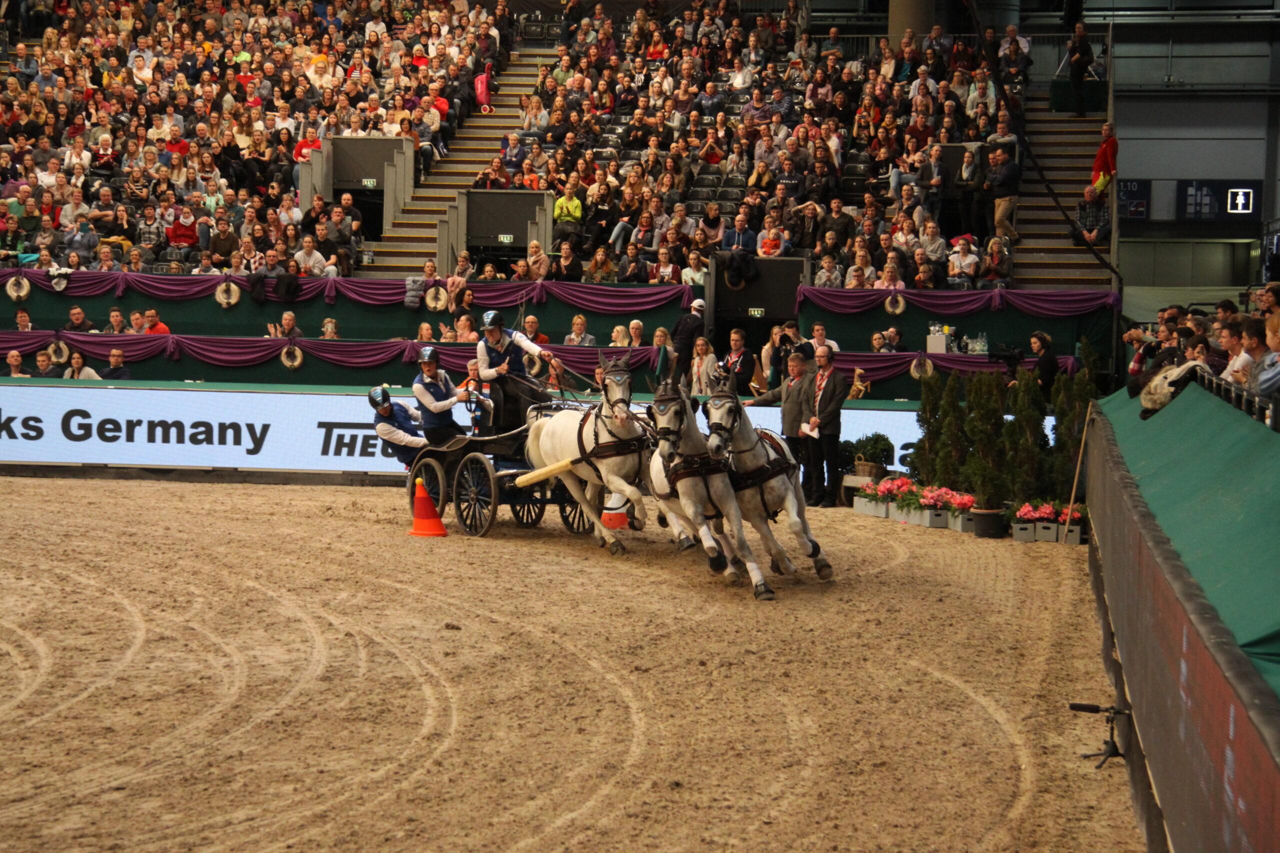 Pferdesport – Vierspänner-Fahren: Ein Vierspänner mit vier Schimmeln fährt eine scharfe Rechtskurve. Die Fahrer auf der Kutsche konzentrieren sich auf das Hindernis, das sie durchfahren. Im Hintergrund ist eine voll gefüllte Zuschauertribüne, Foto: Kati Lomb.